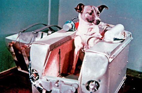 Laïka, chien de l'Union Soviétique